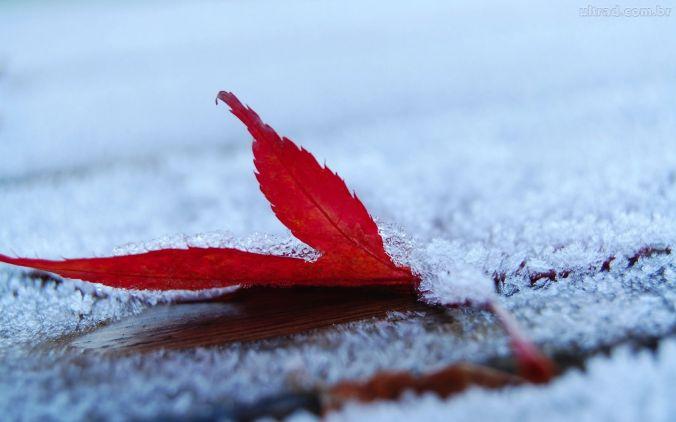"""""""O inverno cobre minha cabeça, mas uma eterna primavera vive em meu coração."""" (Victor Hugo)"""